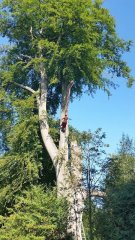 tree surgery Kingswood