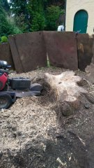 Removing a tree stump in Carshalton