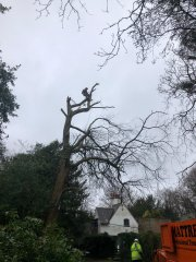 tree-surgery-in-carshalton.jpg