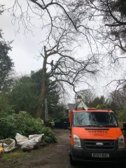 tree-surgery-in-carshalton3.jpg